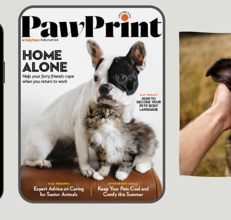 Meredith Corporation launches Paw Print Magazine for cat and dog owners